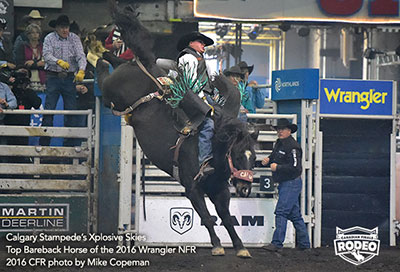 Calgary Stampede Rodeo's Xplosive Skies - Top Bareback Horse of the Wrangler NFR!